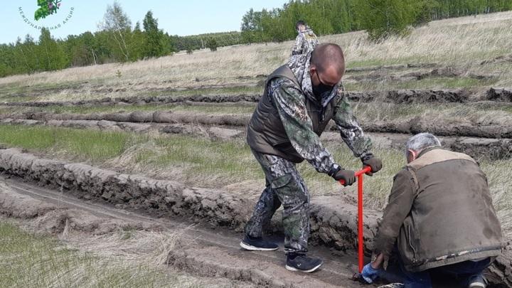В Омской области вырастут новые Сады памяти