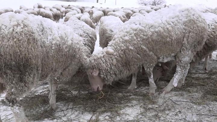 Ураганный ветер и сильнейший снегопад: юг России превратился в север