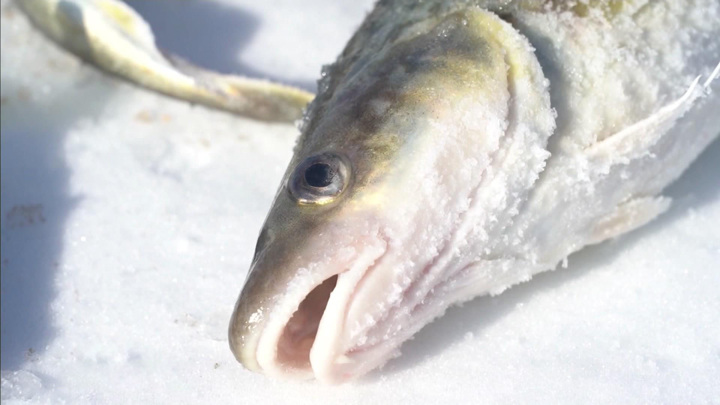 """""""Клевая Колыма"""": рыбацкая удача и вкусная уха"""