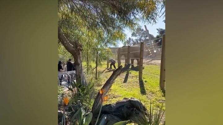 Отец уронил маленькую дочку, убегая от разъяренного слона в зоопарке