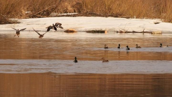 Сроки весенней охоты в Калужской области отодвинули из-за долгой зимы