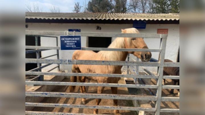 В Крыму лошадь откусила палец 5-летнему ребенку