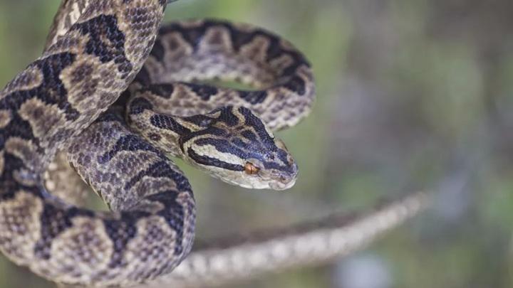 У слюны человека больше общего со змеиным ядом, чем кажется.