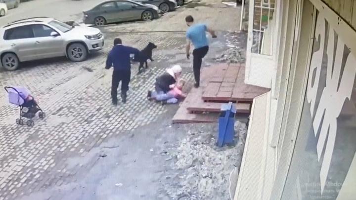 В Саратове бродячая собака напала на пятилетнюю девочку