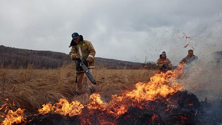 С 1 мая в Подмосковье запретят жарить на природе шашлыки