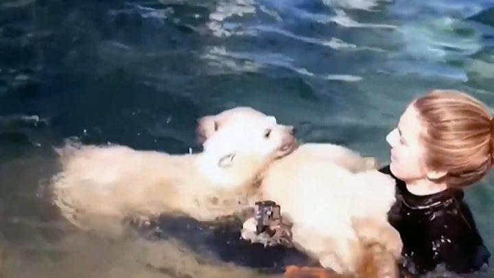 Сафари-парк поделился кадрами первого купания белых медвежат