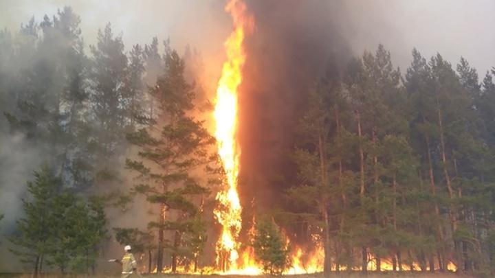 Хоперский заповедник сообщил о возможной гибели барсуков на лесном пожаре