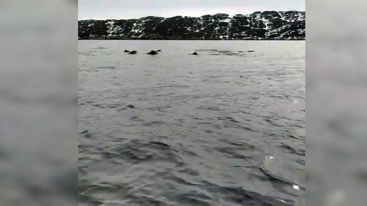Наперегонки с дельфинами: мурманский рыбак выложил забавное видео