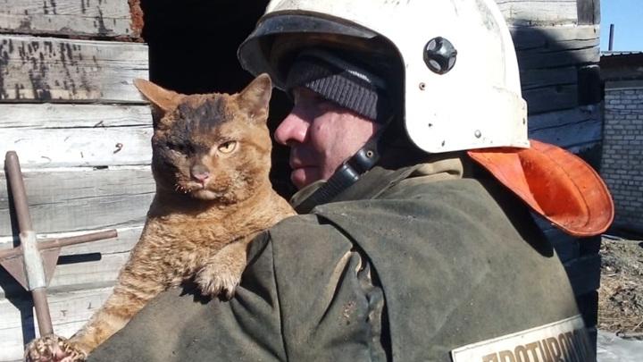 Чудесное спасение: в амурском поселке из огня спасли кота