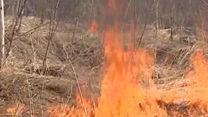 Пожар уничтожил целую деревню вАрхангельской области