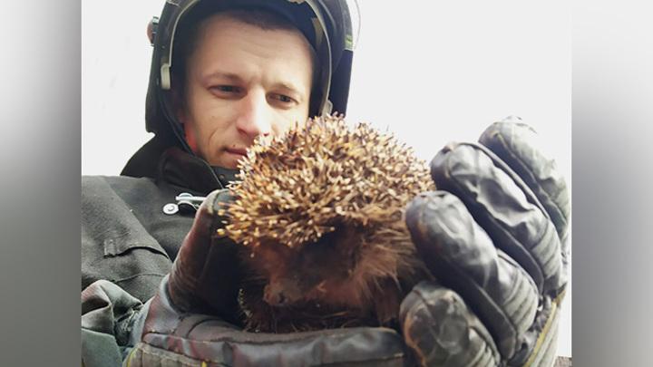 В Подмосковье пожарные спасли лесного ежика