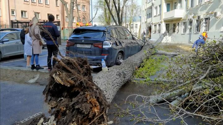 Москву штормит: объявлен желтый уровень опасности