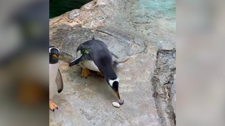 Московский зоопарк перейдёт на летнее расписание