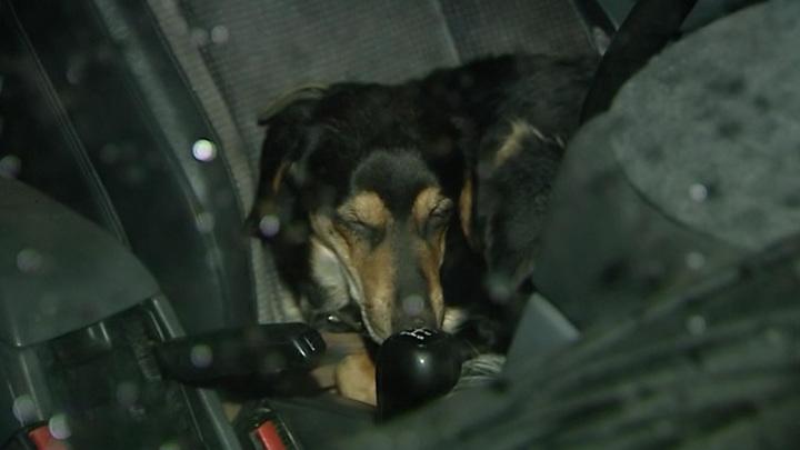 В Москве спасли пса, запертого в машине