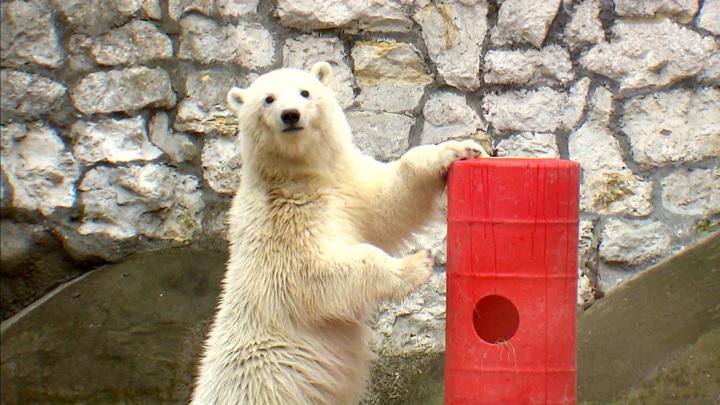 С острова в зоопарк: осиротевший медвежонок обрел новый дом