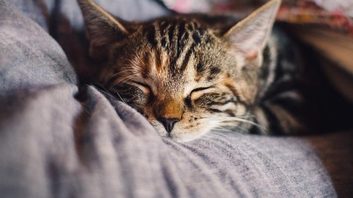 На Ямале женщине вместо планшета пришел наполнитель для кошачьего лотка