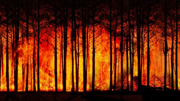 Более 90 тысяч лет назад человек уже был причиной лесных пожаров.