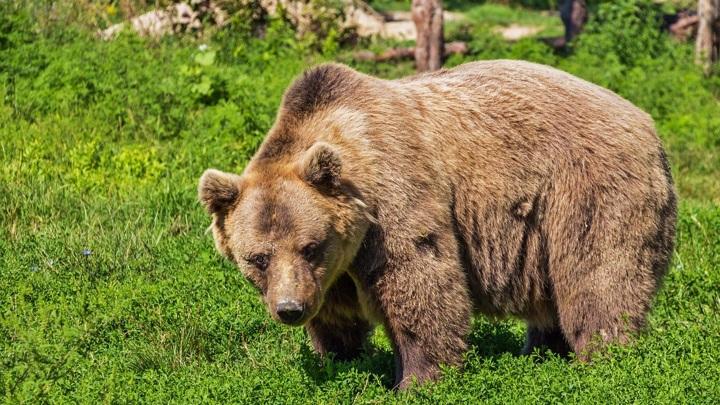 Не видели, но испугались: медведь взволновал посетителей нацпарка на Южном Урале