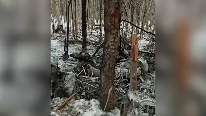 Опубликованы кадры с места крушения вертолета на Камчатке