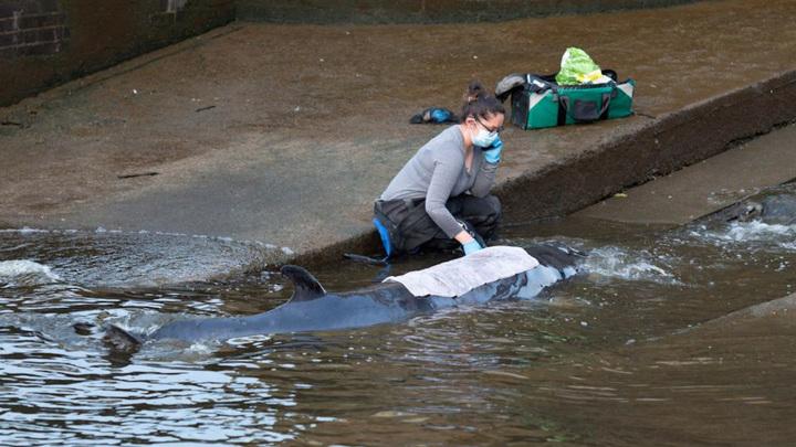 Спасатели освободили застрявшего в лондонском шлюзе детеныша кита