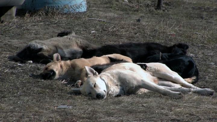Оренбургский суд признал бездействие мэрии по отношению к бездомным животным