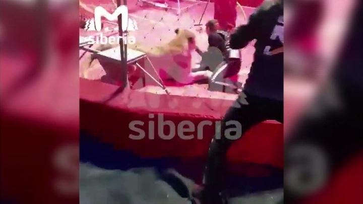 Львица набросилась на дрессировщика во время представления