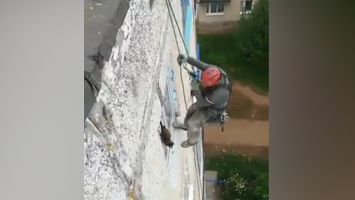 В Пермском крае застрявшего в окне кота спас альпинист