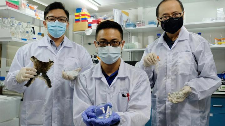 Авторы разработки (слева направо): доцент Далтон Тэй (Dalton Tay), доктор Ван Джун Кит (Wang Jun Kit) и профессор Мэтью Ху Сяо (Matthew Hu Xiao).