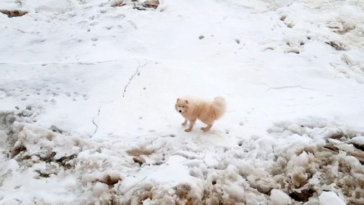 Потерявшуюся собаку нашли среди арктических льдов