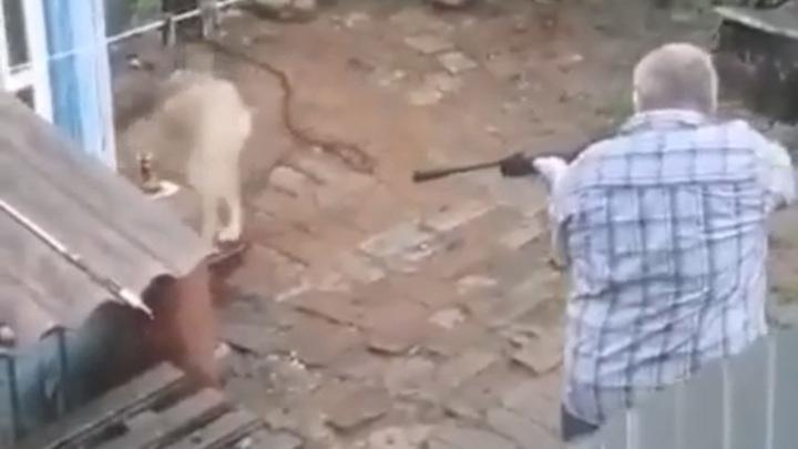 На мужчину, расстрелявшего пса на цепи, завели дело