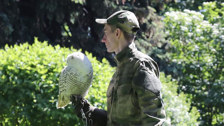 В ФСО новый сотрудник: Кремль от ворон будет охранять сова Буран