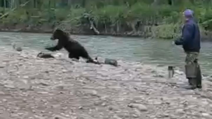 Сахалинские рыбаки с трудом отогнали молодого медведя. Видео