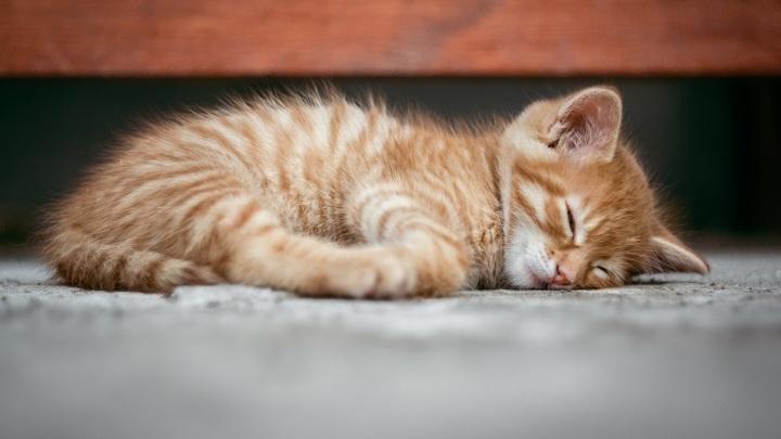 Законопроект об обязательной регистрации кошек и собак поддержал Госсовет Татарстана