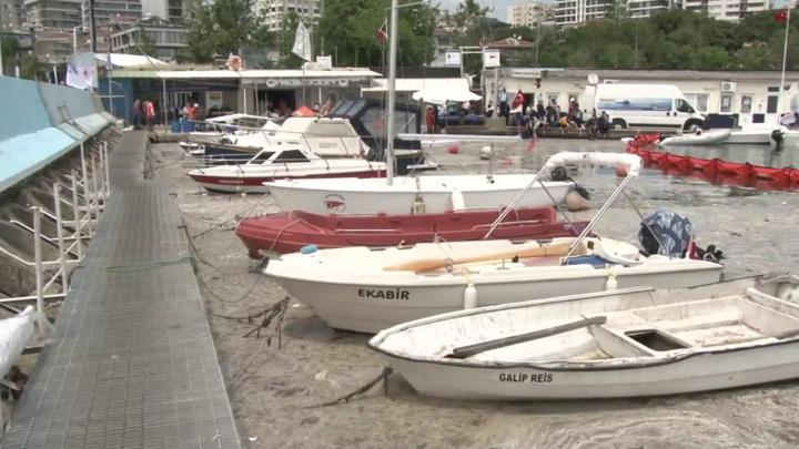 Спасти Мраморное море: Турция начала борьбу с морской слизью