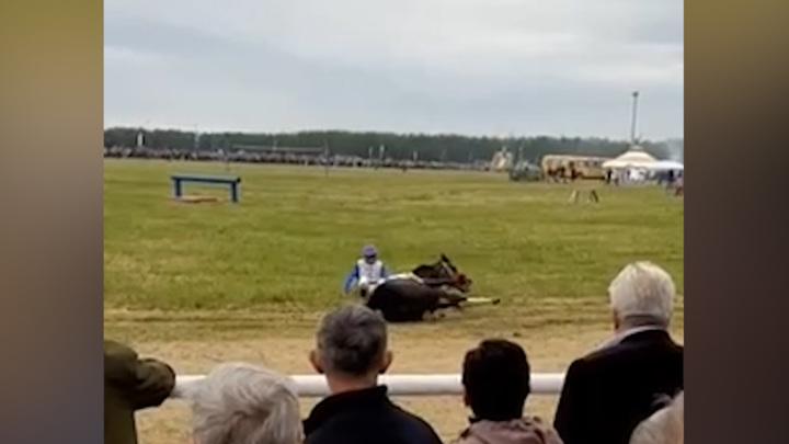 В Башкирии лошадь сбросила наездника и получила травмы