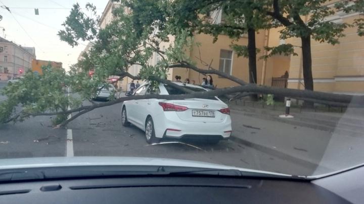 В центре Санкт-Петербурга дерево рухнуло на машину