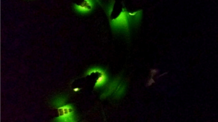Заманили самцов фонариками: под Костромой засняли редких светлячков