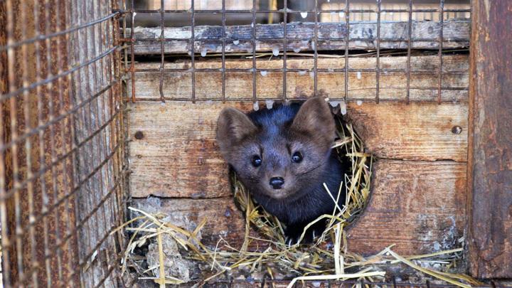На Алтае животные зоопарков сдали тесты на коронавирус