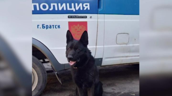 Служебная собака помогла разыскать без вести пропавшего мальчика в Братске