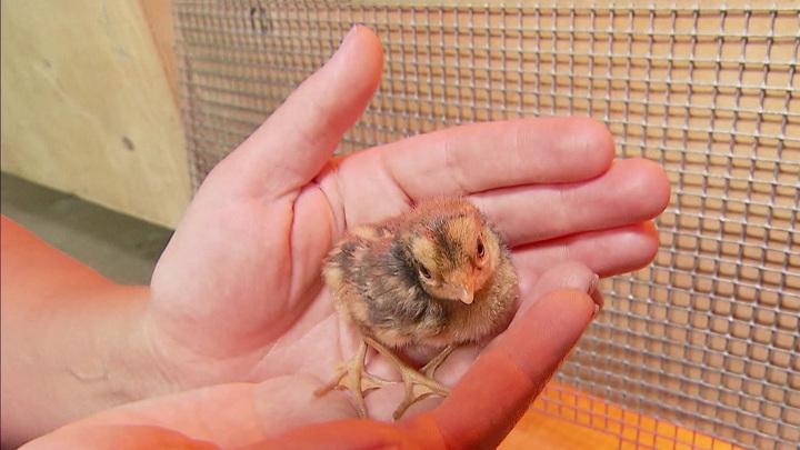 Сотрудники Московского зоопарка рассказали, как помогают животным перенести жару