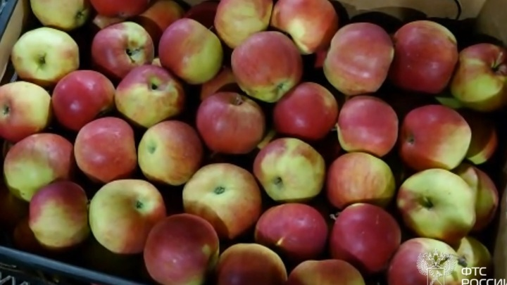 В Смоленскую область незаконно пытались ввезти опасные яблоки и томаты