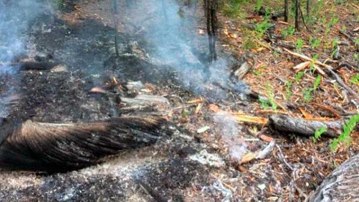 В Бурятии от грозы возникло 8 лесных пожаров