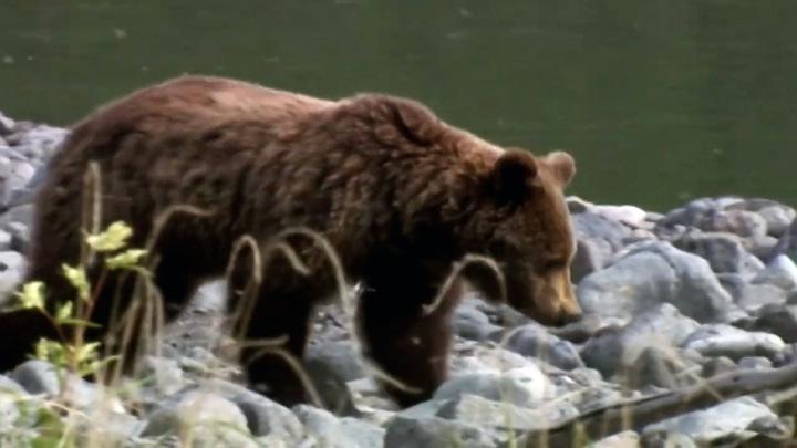 """Хищник напал на женщину около парка """"Танцующих медведей"""""""