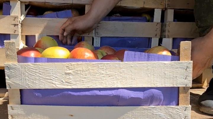 В Смоленскую область пытались ввезти 20 тонн немаркированных яблок