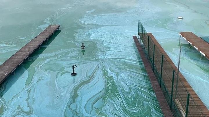 """""""Лже-химическая жижа"""": водоросли в реке Бердь """"обманули"""" глаза сибиряков"""