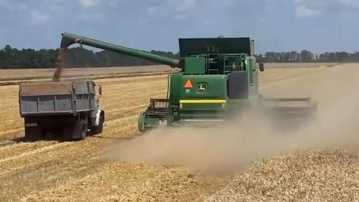 Рекорд урожая: Кубань дает стране хлеб