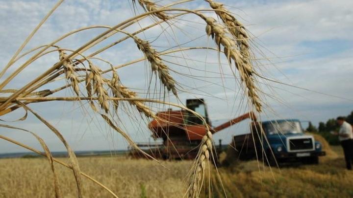 Более 560 тысяч долларов составил за неделю агроэкспорт Чувашии