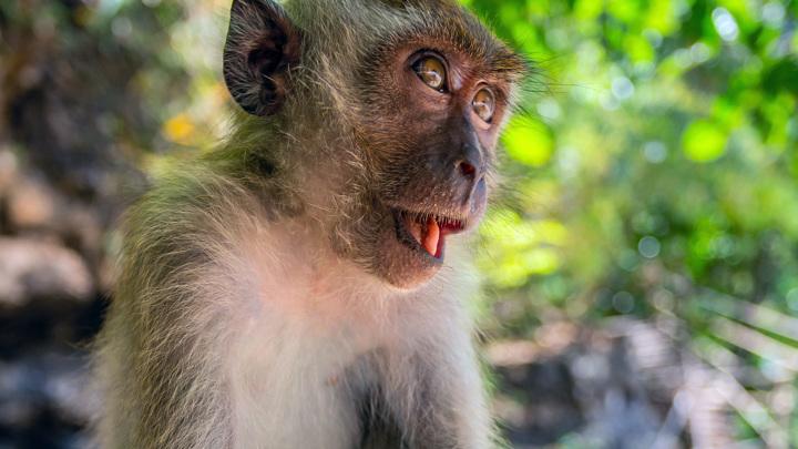 Коронавирус и приматы: в зоопарке Челябинска ввели карантин для обезьян