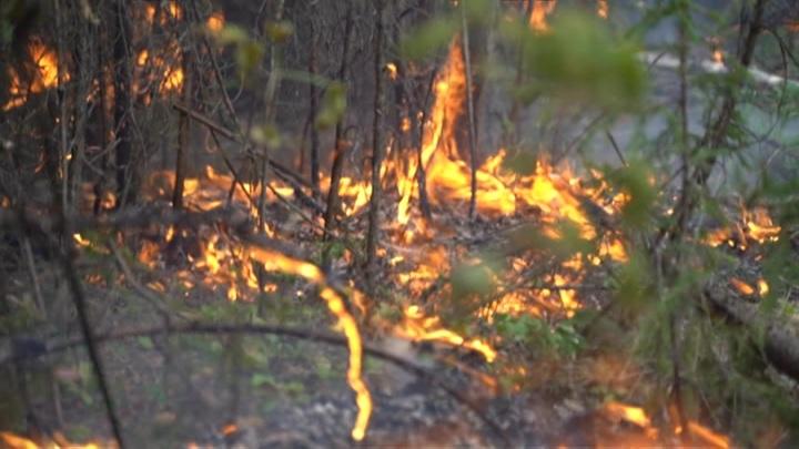 В результате природных пожаров в Челябинской области уничтожено 71 строение