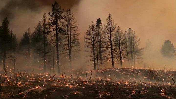 Природные пожары в Калифорнии: эвакуировано почти 3 тысячи человек
